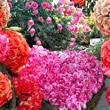 Bloemen Plaatjes voor Facebook