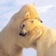Knuffels Krabbel Plaatjes