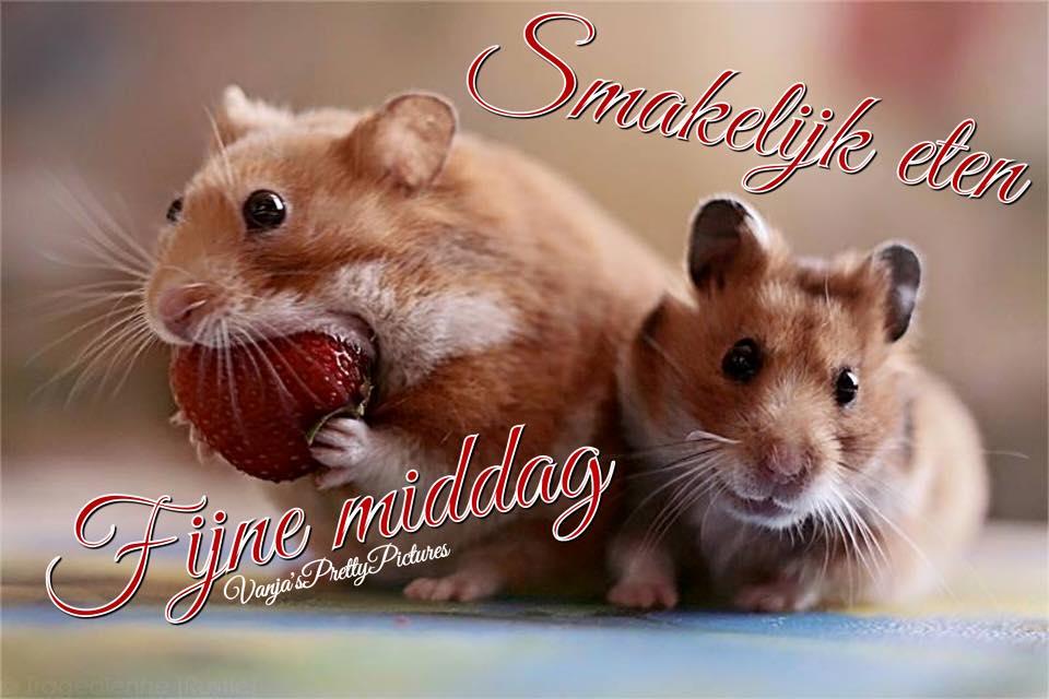 Hamster Schattig Klein Aardbei Eten Dier Dieren Goedemiddag
