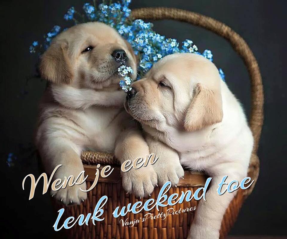 Wens je een leuk weekend toe