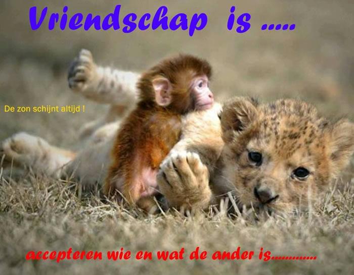 Vriendschap is... accepteren wie en wat...