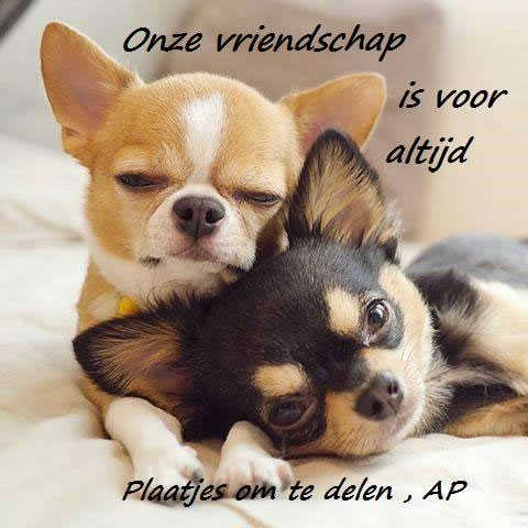 Onze vriendschap is voor...