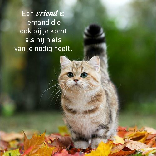 Vriendschap plaatje 1