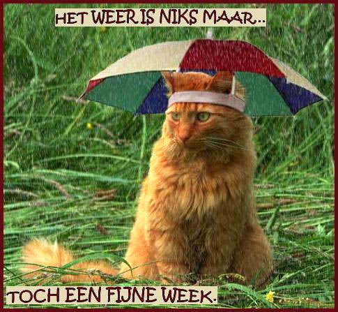 Het weer is niks maar... toch een fijne week