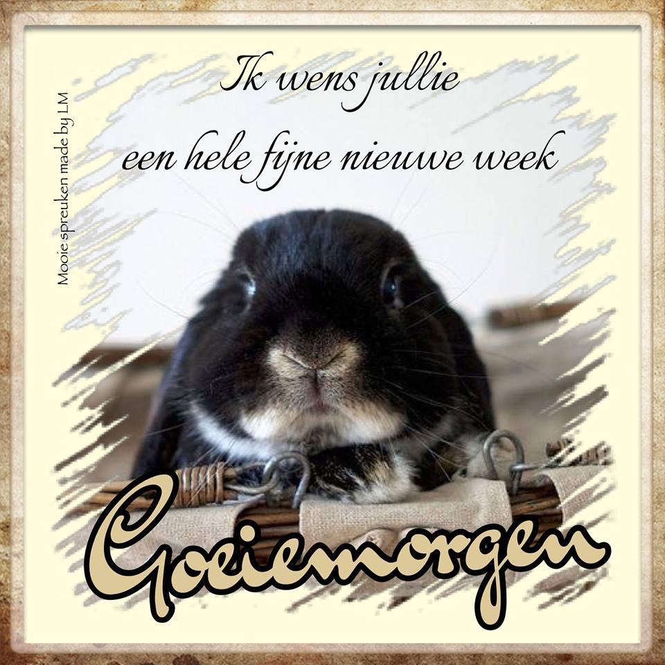 Ik wens jullie een hele fijne nieuwe week. Goeiemorgen