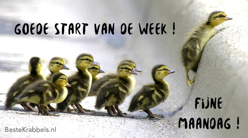 Goede start van de week! fijne maandag!