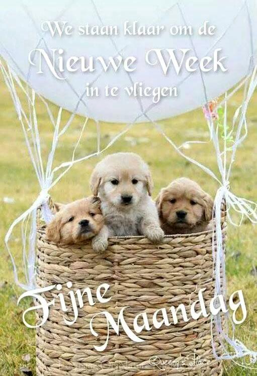 We staan klaar om de nieuwe week in te...