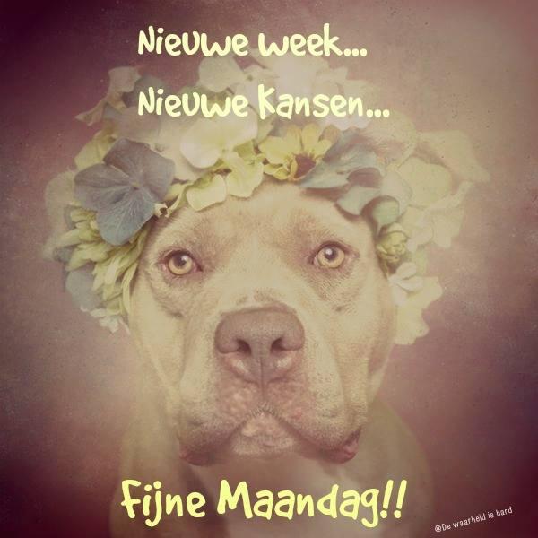 Nieuwe week... Nieuwe...