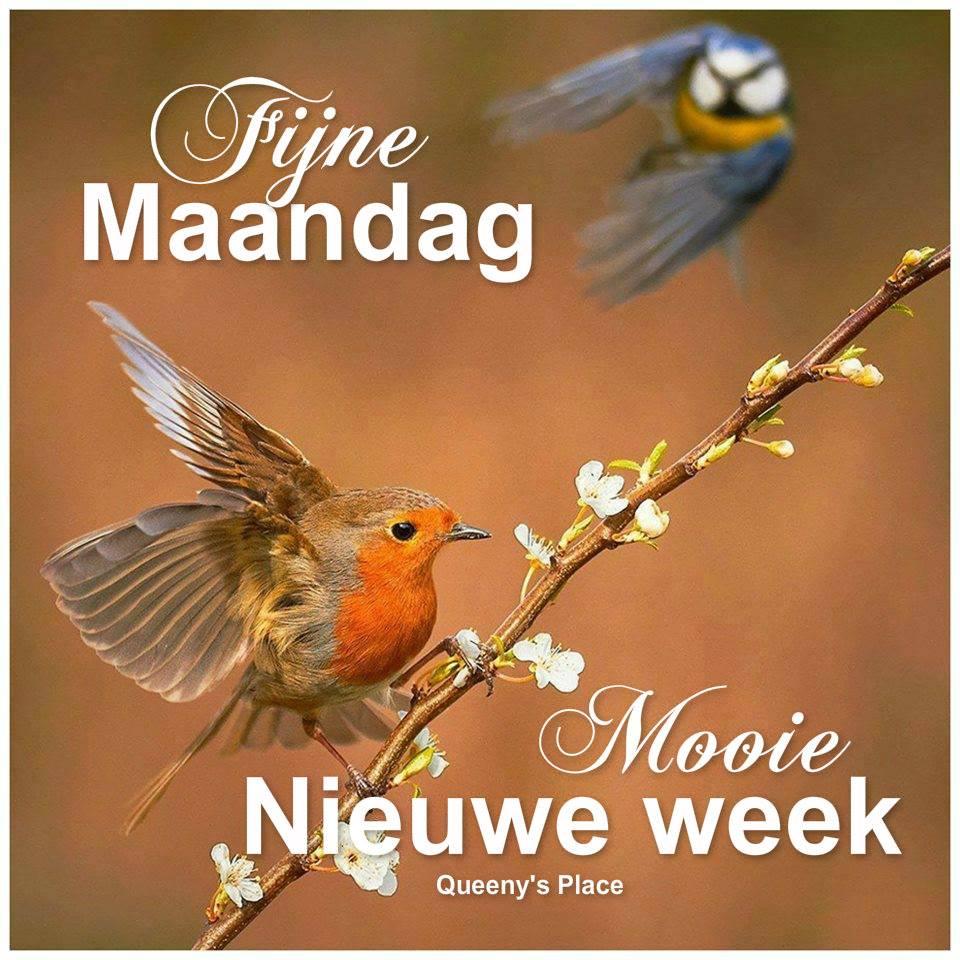 Fijne Maandag Mooie nieuwe week