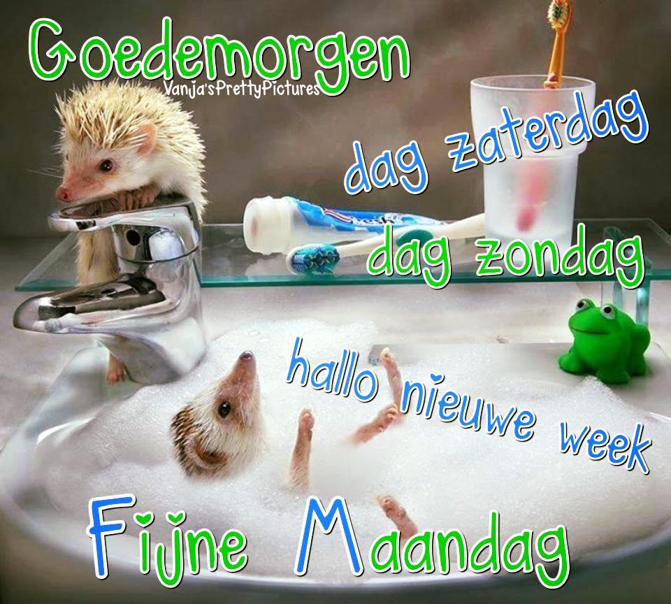 Goedemorgen dag zaterdag, dag zondag. Hallo nieuwe week. Fijne Maandag