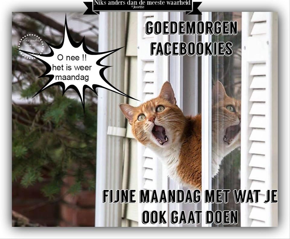 Goedemorgen facebookies Oh nee het is weer maandag Fijne maandag met wat je ook gaat doen
