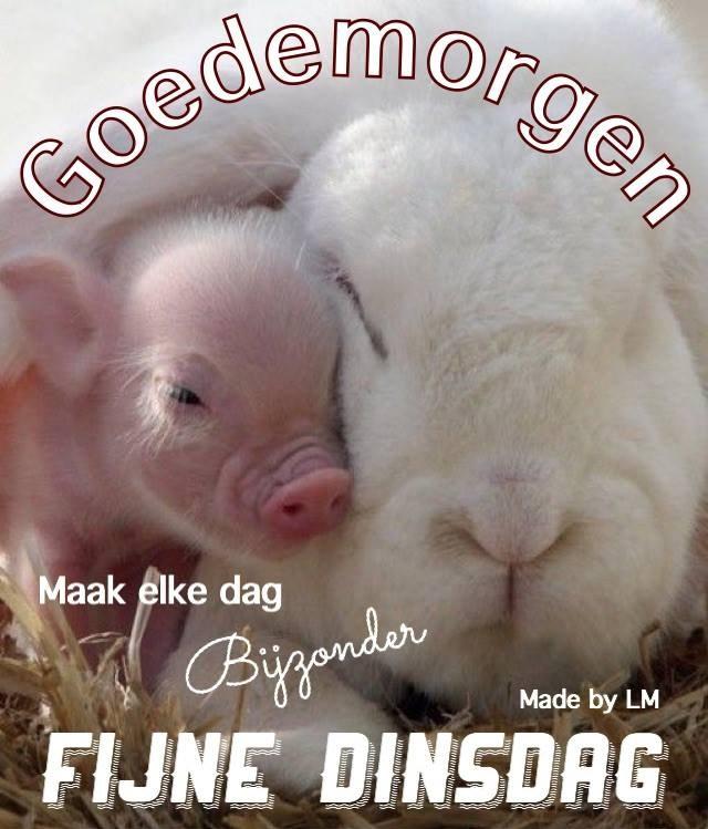 Goedemorgen Facebook Maak elke dag bijzonder Fijne Dinsdag