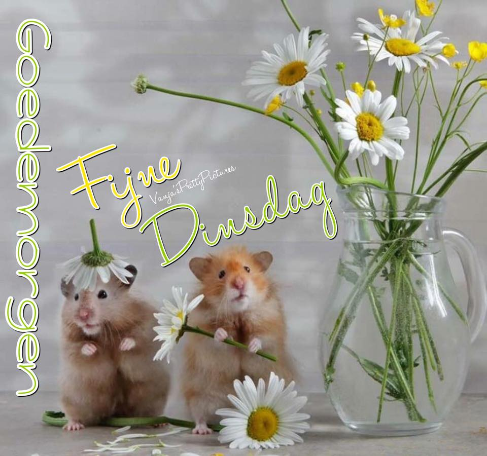 Goedemorgen, Fijne Dinsdag