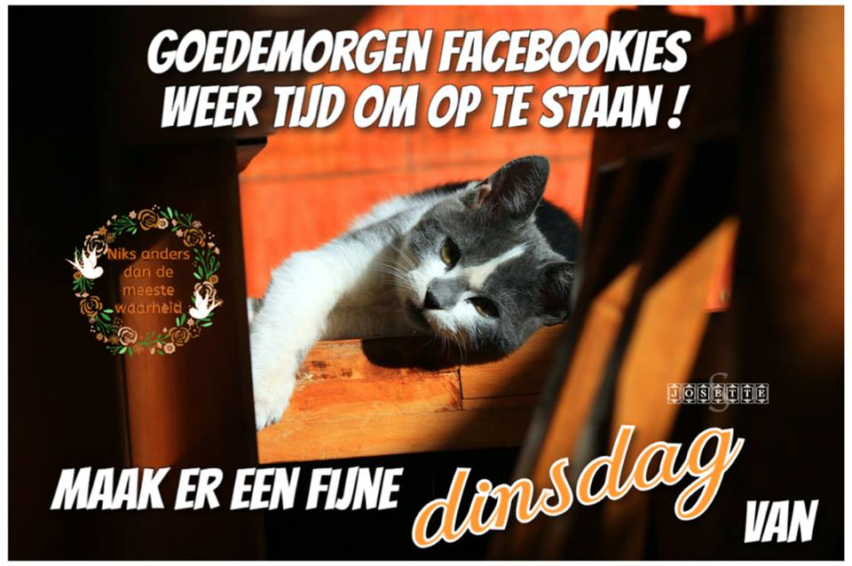 Goedemorgen Facebookies Weer tijd om op te staan ! Maak er een fijne dinsdag van