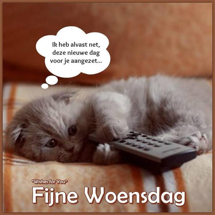 Afbeeldingsresultaten voor Fine dag met nostalgie katten.