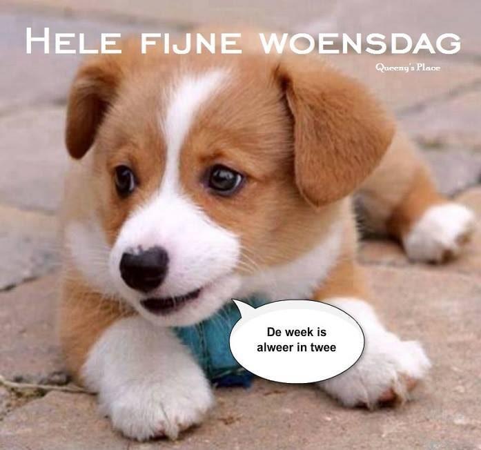 Hele Fijne Woensdag De week is alweer in...