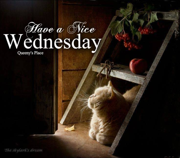 Have a nice Wednesday Plaatjes