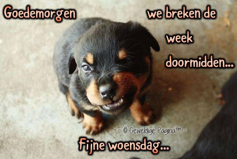 Goedemorgen, we breken de week doormidden... Fijne woensdag Plaatjes