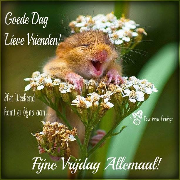 Goede dag lieve vrienden! Het weekend komt en bijna aan... Fijne vrijdag allemaal!