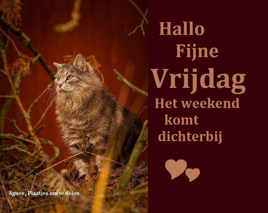 Hallo fijne vrijdag het weekend komt dichterbij