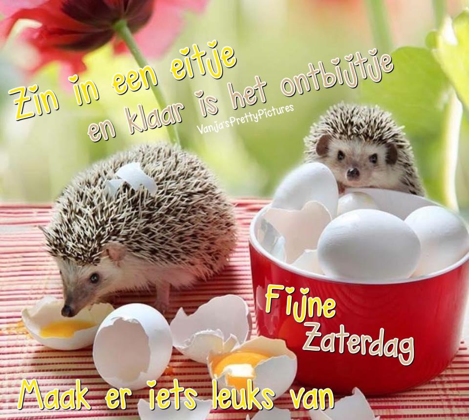 Zin in een eitje en klaar is het ontbijtje Fijne Zaterdag Maak er iets leuks van