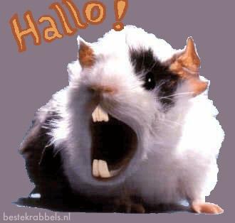 Hallo 11