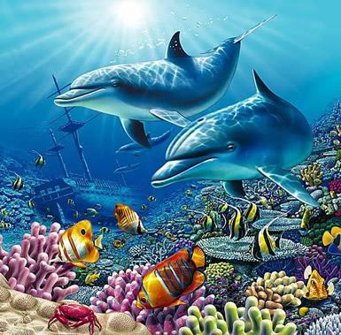 Dolfijnen plaatje 5
