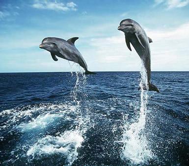 Dolfijnen plaatje 8