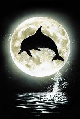 Dolfijnen plaatje #2403