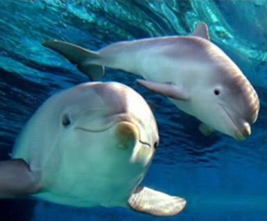 Dolfijnen plaatje 2