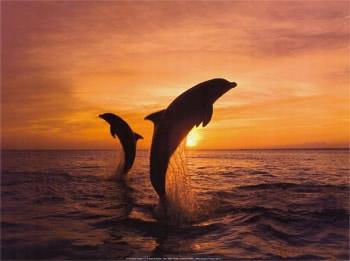 Dolfijnen 5