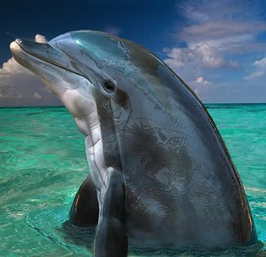 Dolfijnen 13