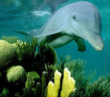 Dolfijnen 9