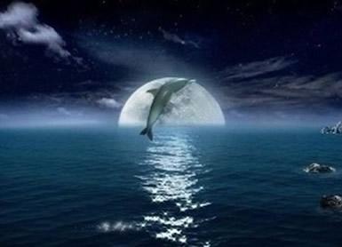 Dolfijnen 12