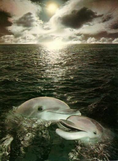 Dolfijnen plaatje #2453