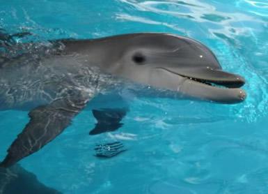 Dolfijnen plaatje #2461