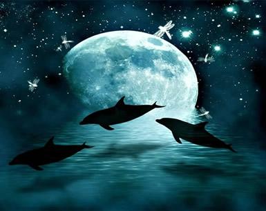 Dolfijnen plaatje 7