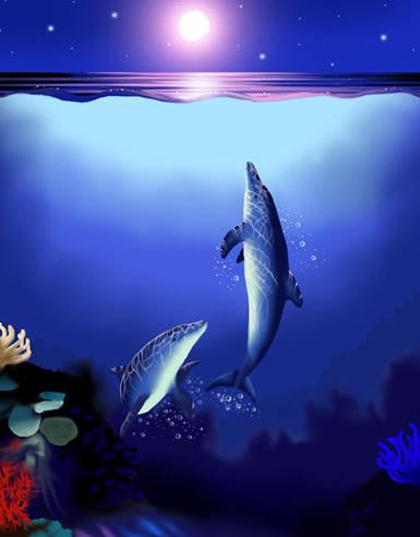 Dolfijnen plaatje 11