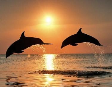 Dolfijnen 15