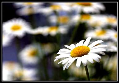Bloemen plaatje #2600