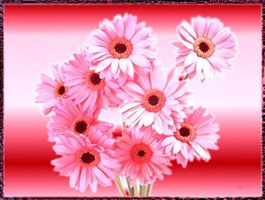 Bloemen plaatje 3