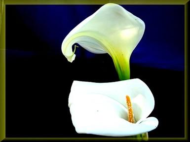 Bloemen plaatje 8