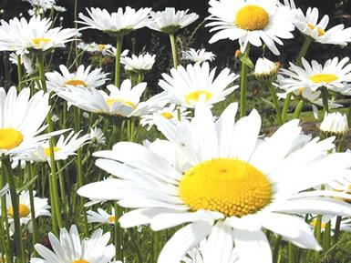 Bloemen plaatje 7