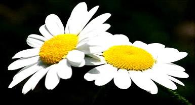 Bloemen plaatje 2