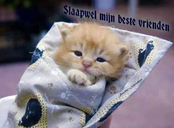 Slaapwel mijn beste vrienden