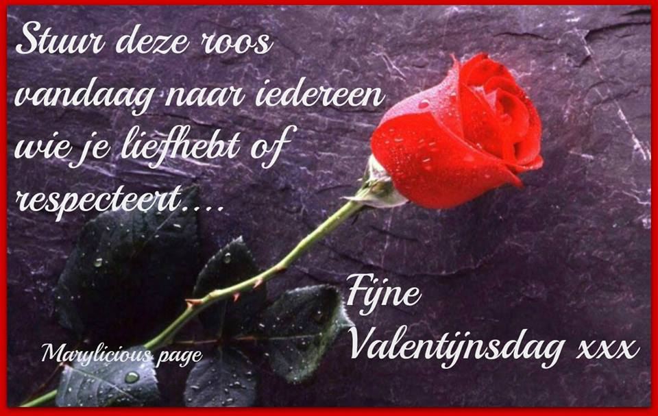 Stuur deze roos vandaag naar iedereen wie je liefhebt of respecteert... Fijne Valentijnsdag xxx