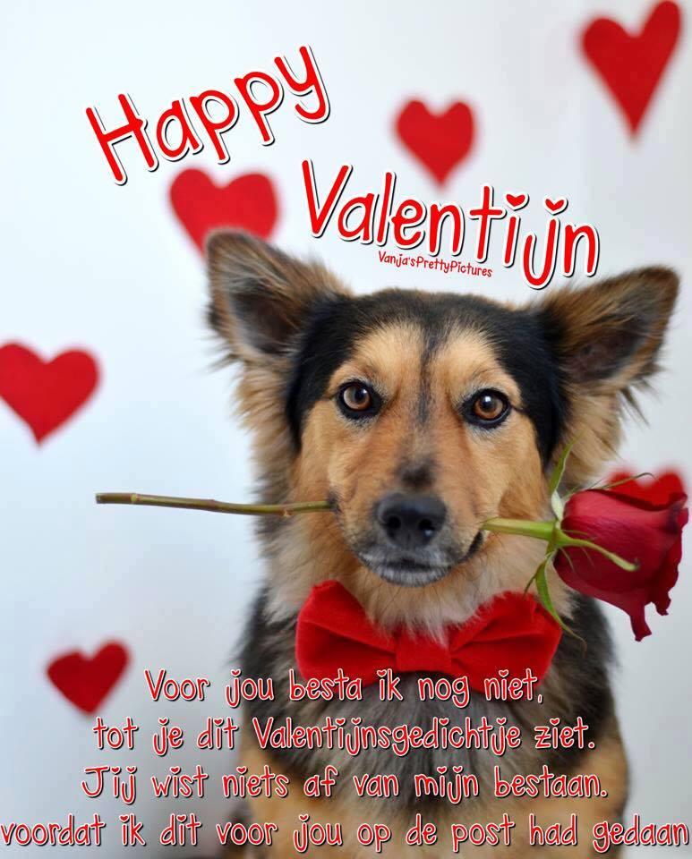 Happy Valentijn Voor jou besta ik nog niet, tot je dit Valentijnsgedichtje ziet. Jij wist niets af van mijn bestaan. voordat...