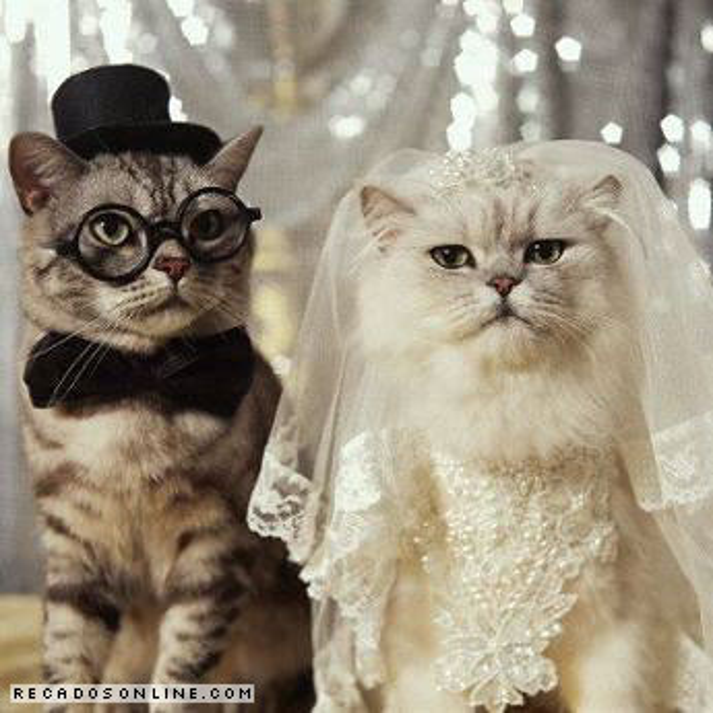 Meneer en Mevrouw Kat