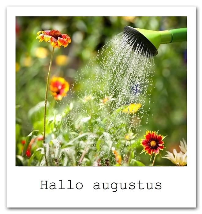 Hallo augustus