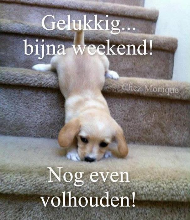 Gelukkig... bijna weekend! Nog even...
